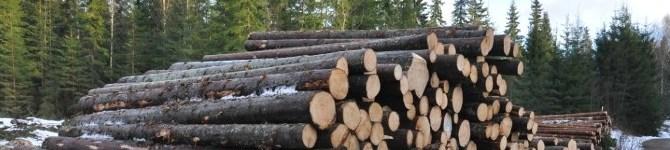 Dansk Træforening er brancheorganisation for importører af træ til Danmark