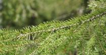 Miljøpolitik i Dansk Træforening