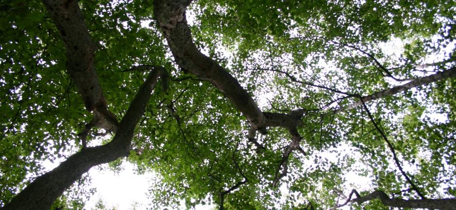 Indsatsen mod ulovligt træ skal bl.a. forhindre ubæredygtig skovdrift, tab af skov og andre afledte skadevirkninger