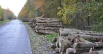 Træmarkedet skal levere bæredygtigt træ til staten