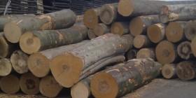 Dansk Træforening har en stærk miljøprofil